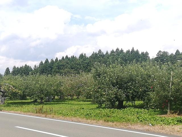 リンゴ畑の画像