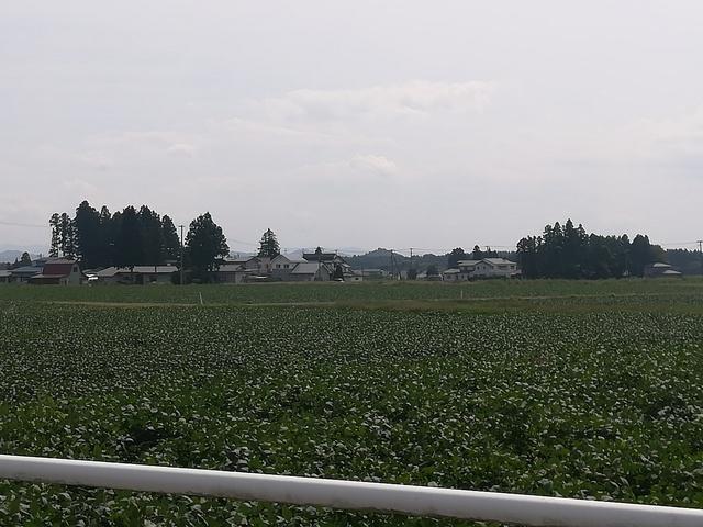 ジャガイモ畑の画像