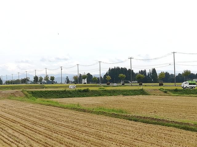 コンバインを使って稲刈りをしている画像